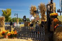 2011 Halloween Topiary Display