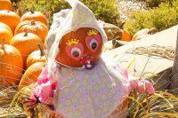 2012 Baby PumpkinTopiary Display
