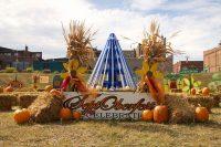 2013 Pumpkin Display