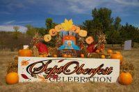 2013 Pumpkin Topiary Display
