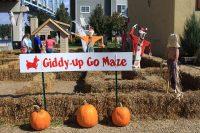 2014 Giddy-Up Go Maze