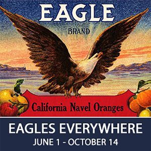 Special Exhibit: Eagles Everywhere @ National Eagle Center