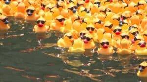 Duck Derby @ Downtown Wabasha | Wabasha | Minnesota | United States